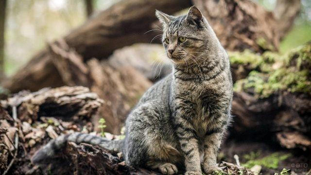 Полосатый кот в валежнике