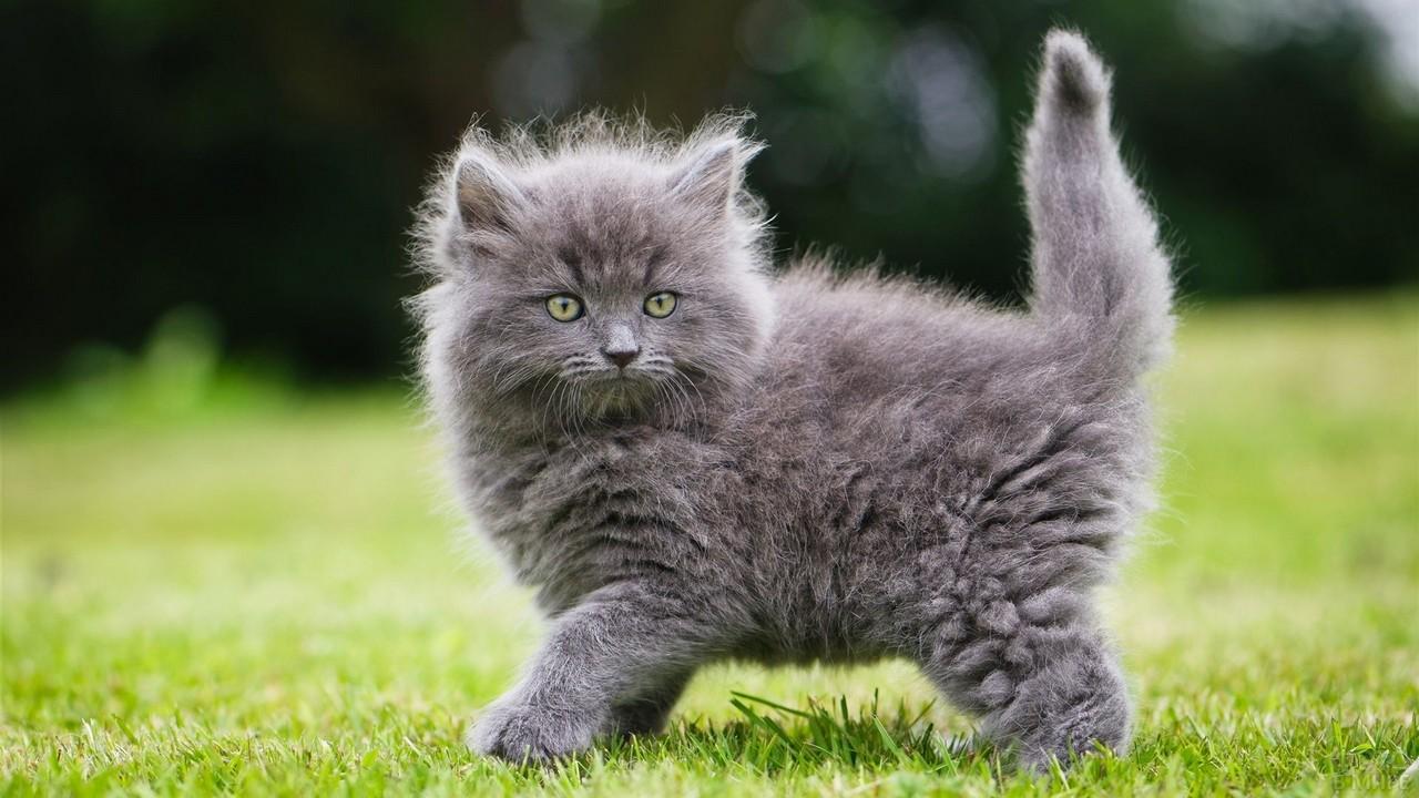 Пушистый котёнок на газоне
