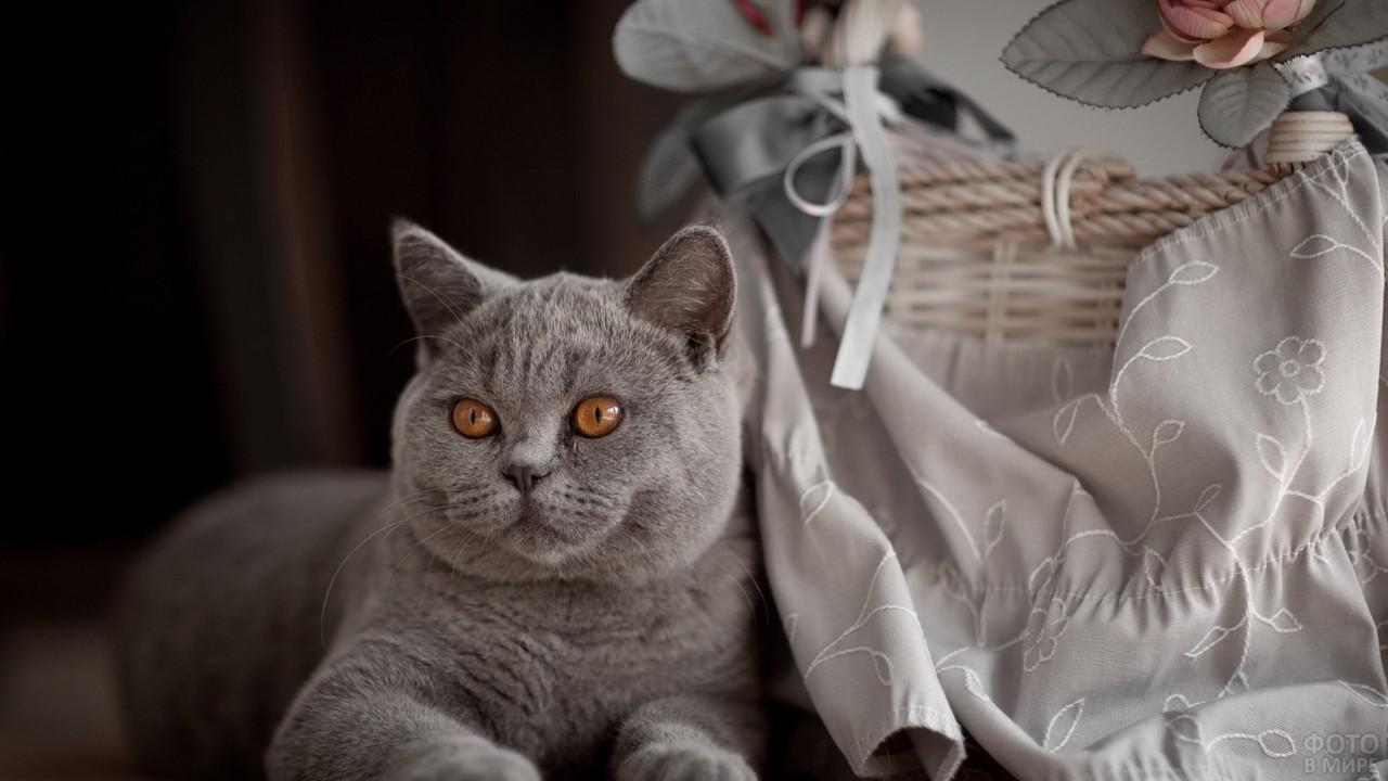 Серая кошка возле корзины