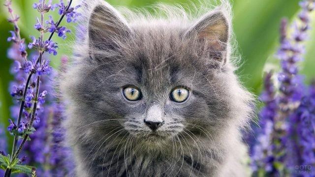 Серый котёнок в синих цветах