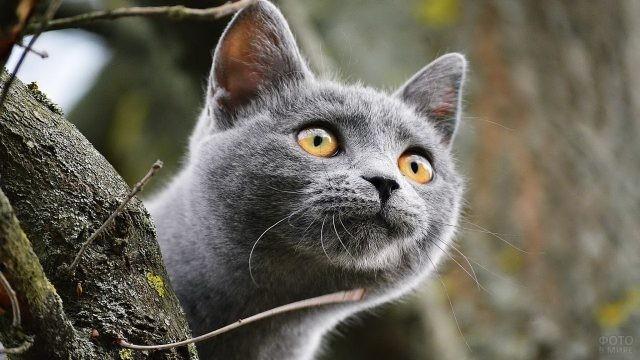 Внимательная кошка у дерева