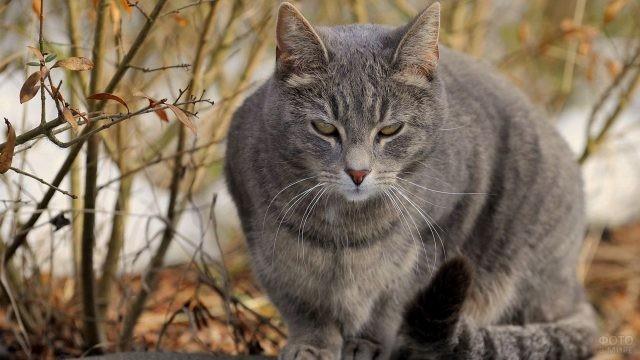 Зажмурившийся кот на природе