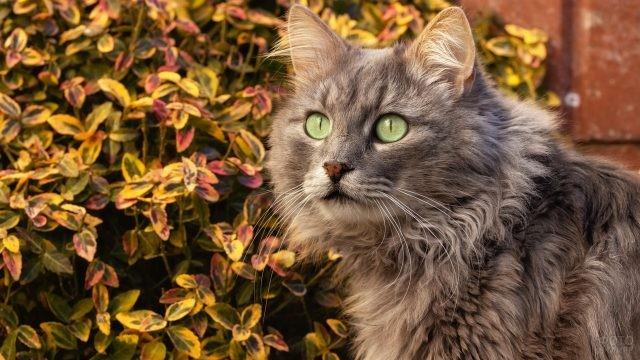 Зеленоглазая кошка на фоне цветных листьев