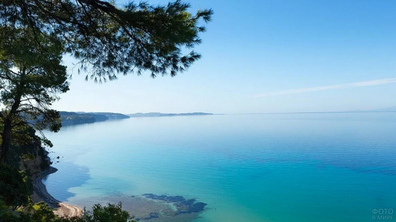 Сосна на обрыве в Эгейском море