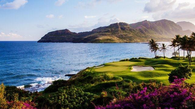 Цветы и поля для гольфа под пальмами