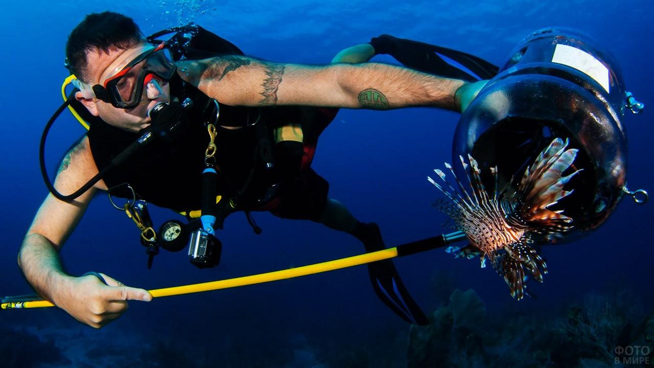 Дайвер-рыболов с добычей