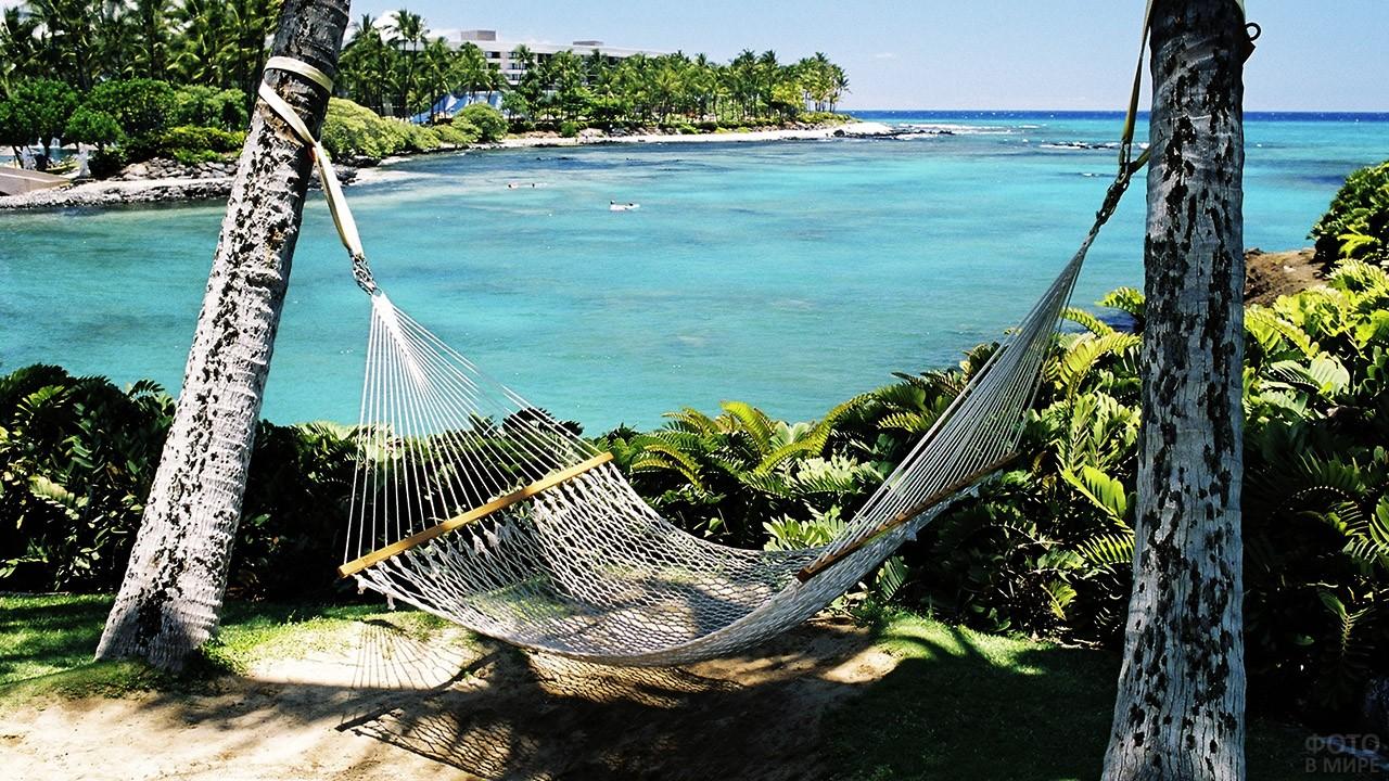 Гамак на побережье под пальмами