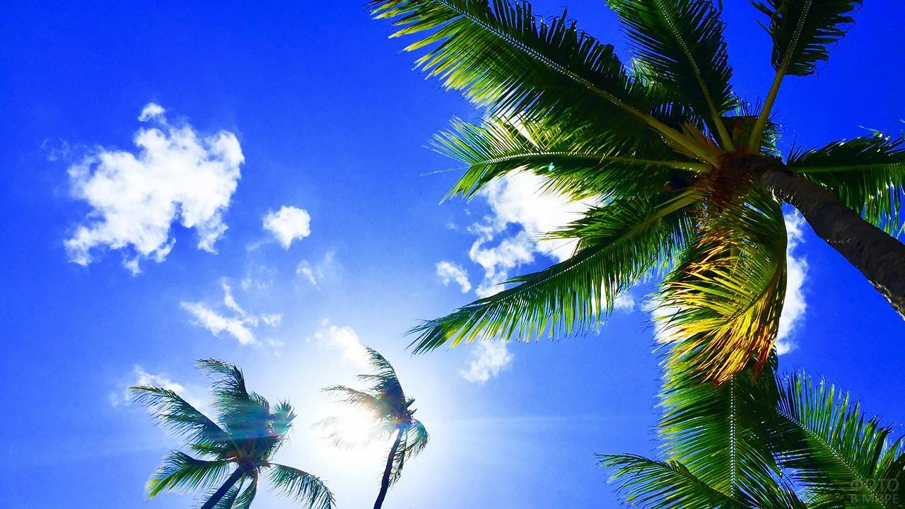 Пальмы над головой на фоне ясного неба