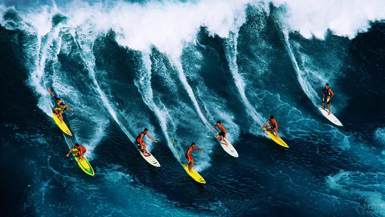 Сёрферы на тихоокеанской волне