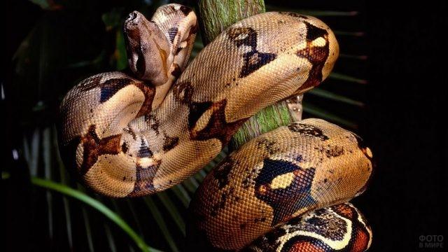 Гигантская змея ползёт по дереву