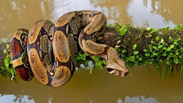 Змея обвивает ствол дерева