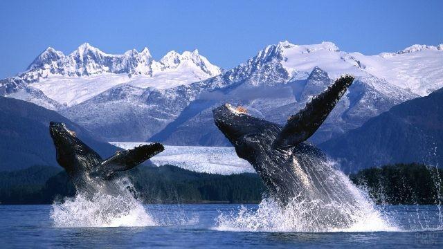 Прыжок китов на Аляске в Тихом океане
