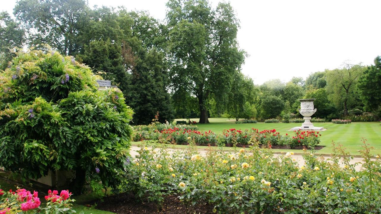 Цветущий розарий королевского сада