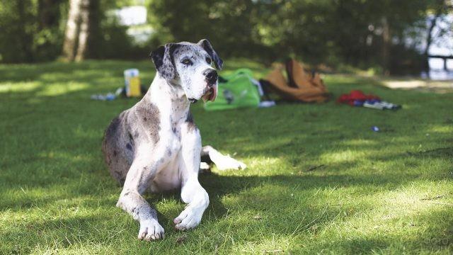 Внимательная собака на природе