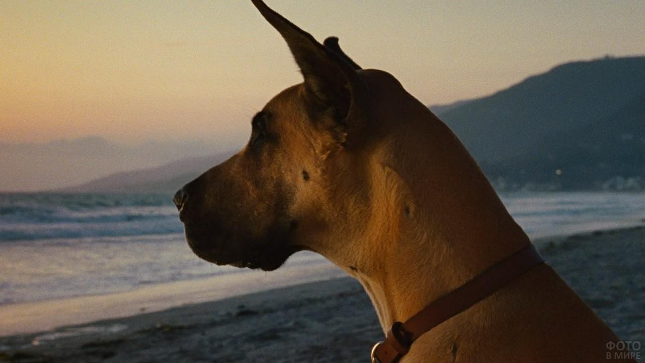 Задумчивая собака смотрит вдаль на пляже