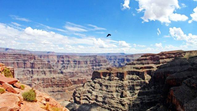 Птица летит над каньоном на плато Колорадо