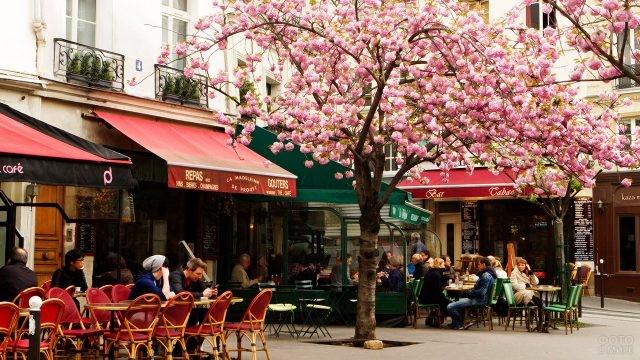 Столики кафе под цветущим весенним деревом
