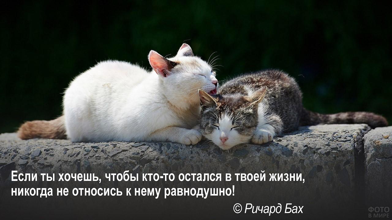 Неравнодушное отношение - ласковые котики