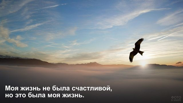 Несчастливая жизнь - одинокая птица над туманом