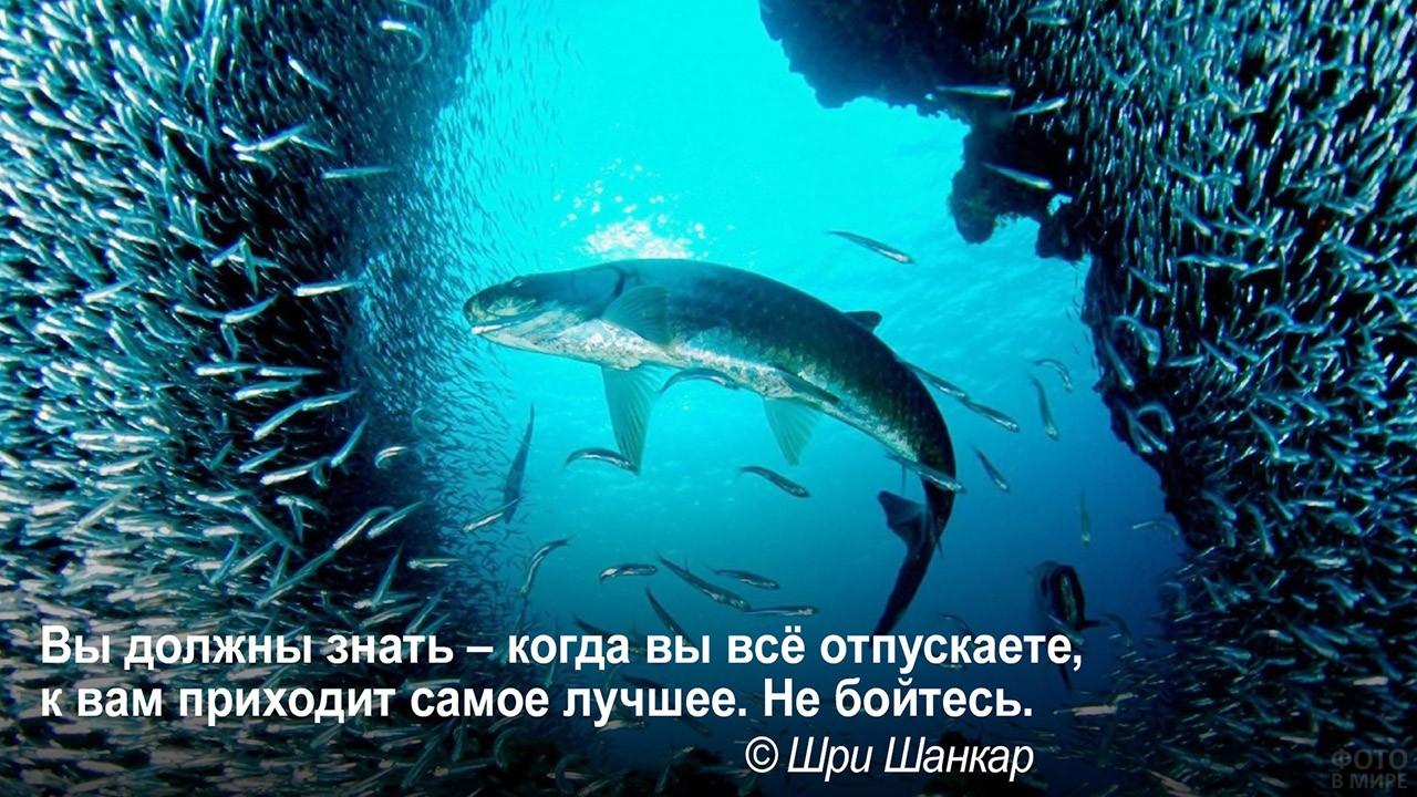 Освободиться для большего - большая рыба среди мелкой