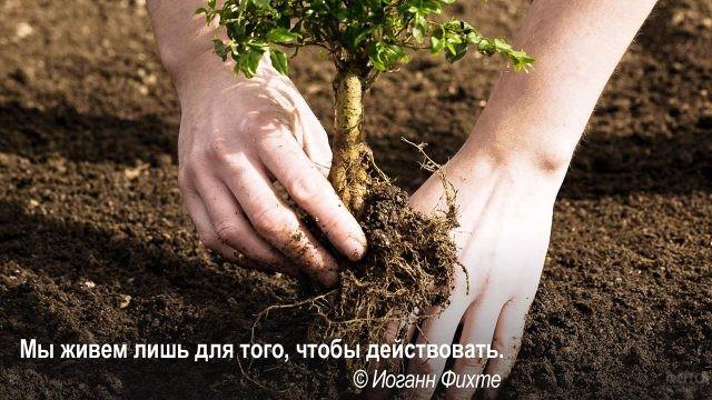 Жить и действовать - посадка деревца
