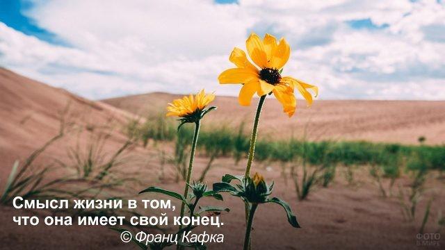 Жизнь не бесконечна - цветы в пустыне