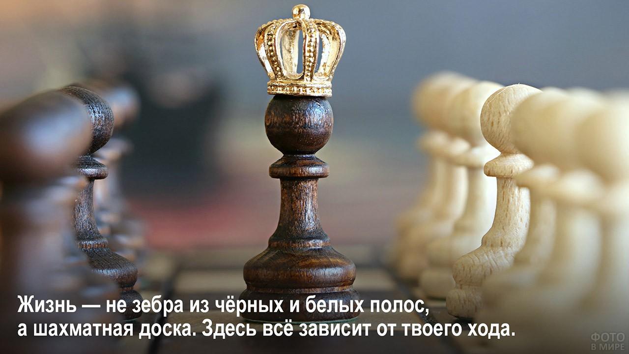 Жизнь не зебра, а шахматы - пешка в короне