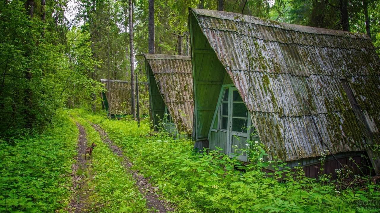 Домики в заброшенном пионерском лагере