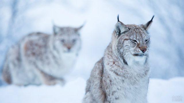 Хищники в снежной степи