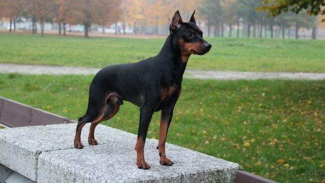 Красивая стойка собаки на каменной плите