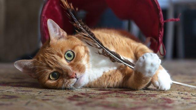 Домашняя кошка играет с пером