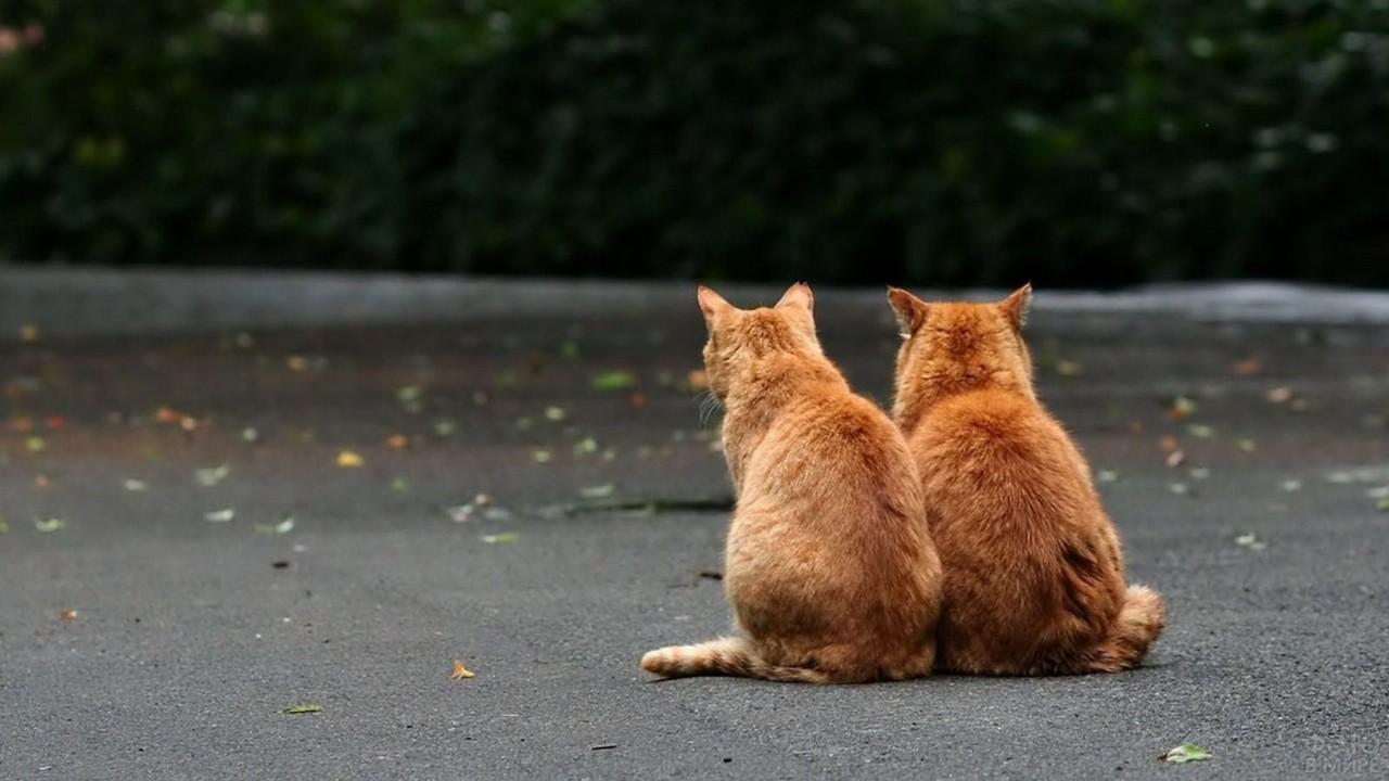 Два кота сидят на асфальте