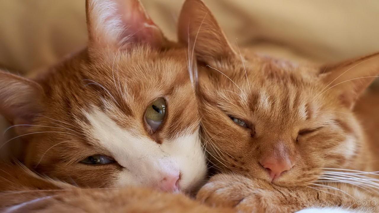 Две кошки спят рядом