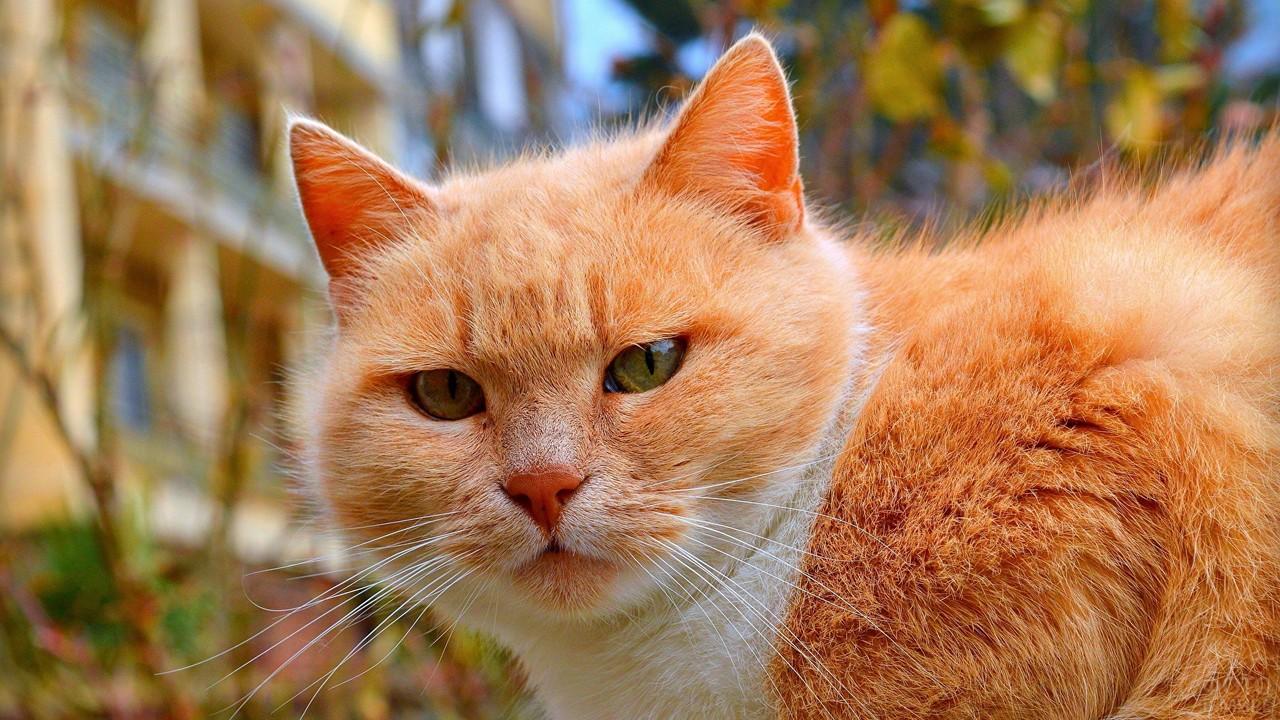 Яркая кошка на природе