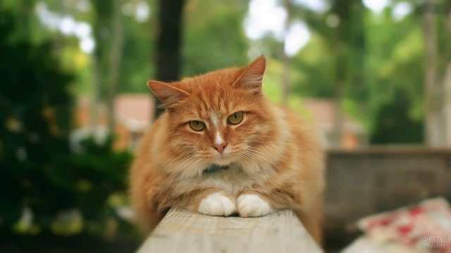 Кошка сложила лапки на перилах