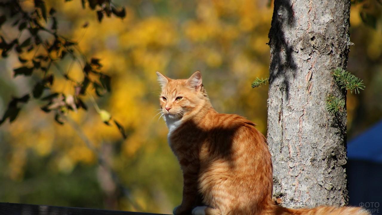 Кошка возле дерева на природе
