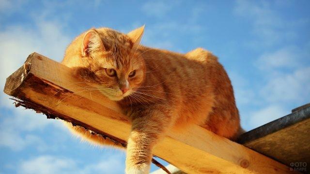 Кот лежит на доске под крышей