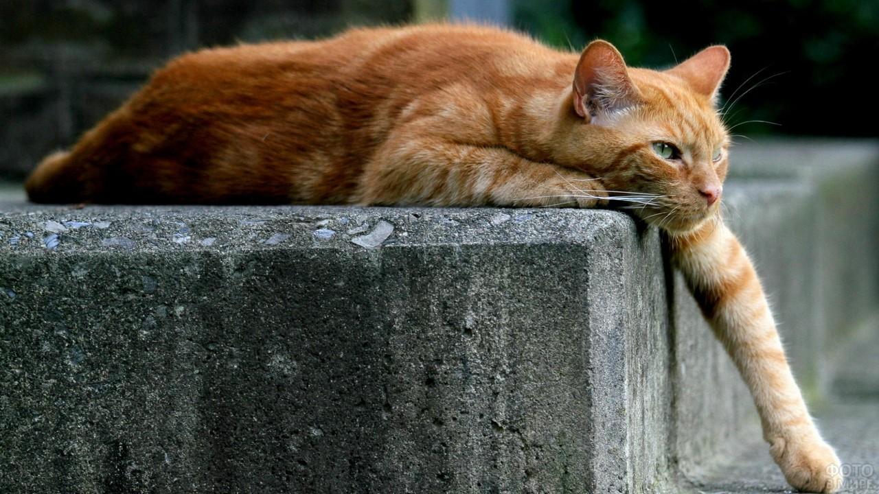 Кот свесил лапу с бордюра