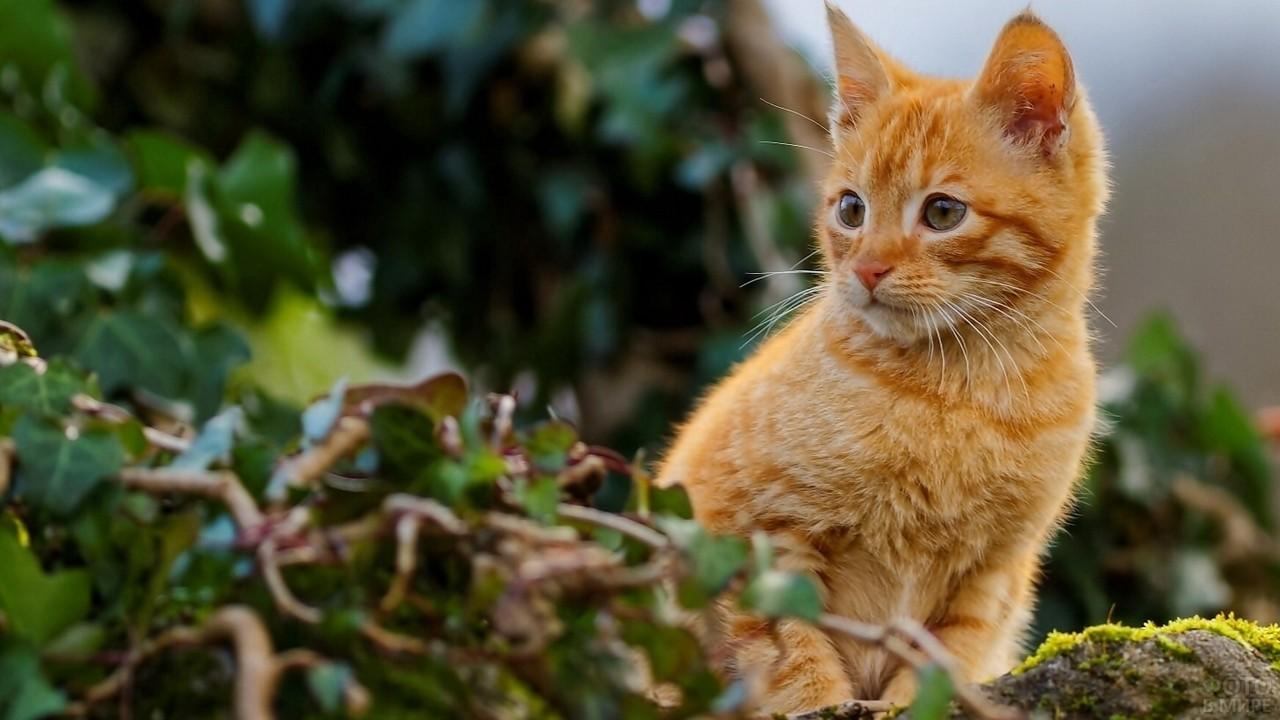 Котёнок выглядывает из-за растений