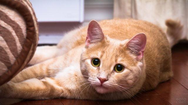 Красивая кошка на полу