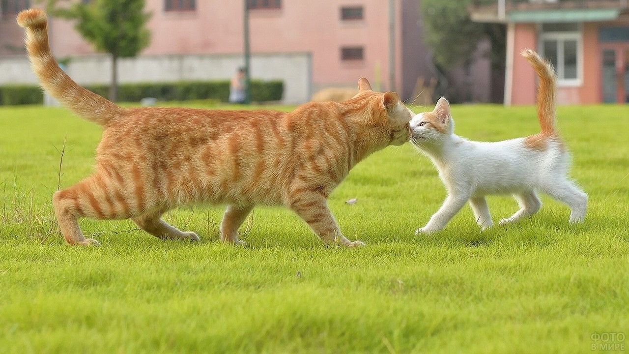Мамочка и котёнок нюхают друг друга