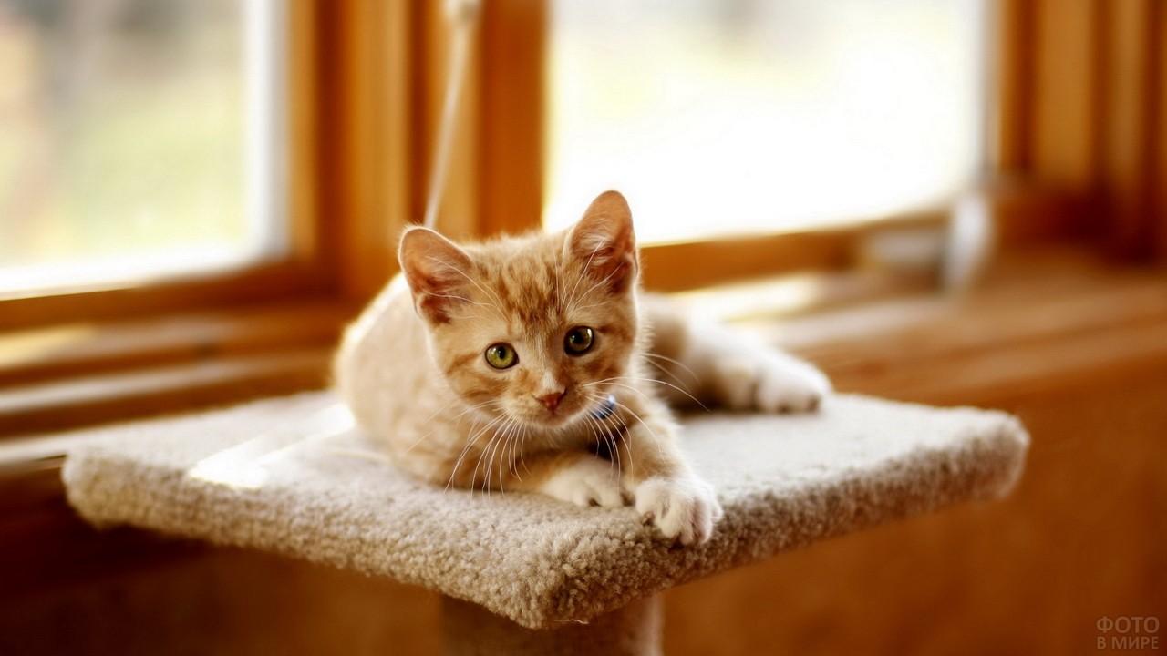 Милый котёнок на возвышении