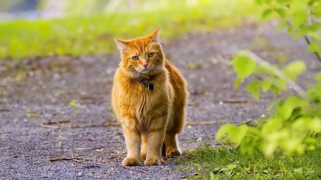 Осторожная кошка на тропинке