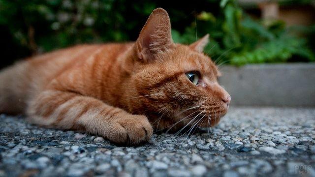Полосатая кошка на тротуаре