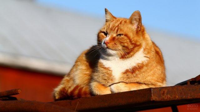 Прищурившийся кот на крыше