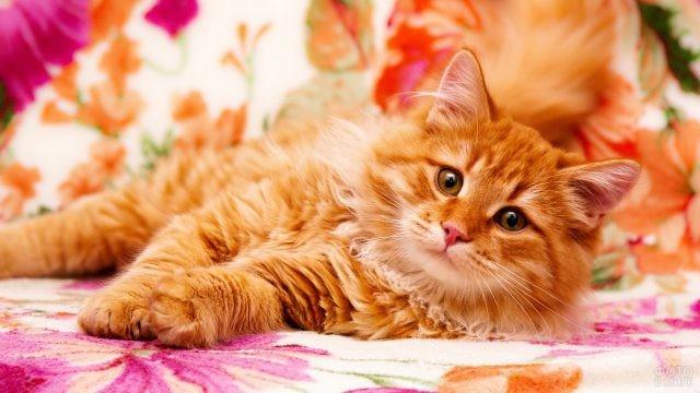 Пушистая кошка на цветном диване