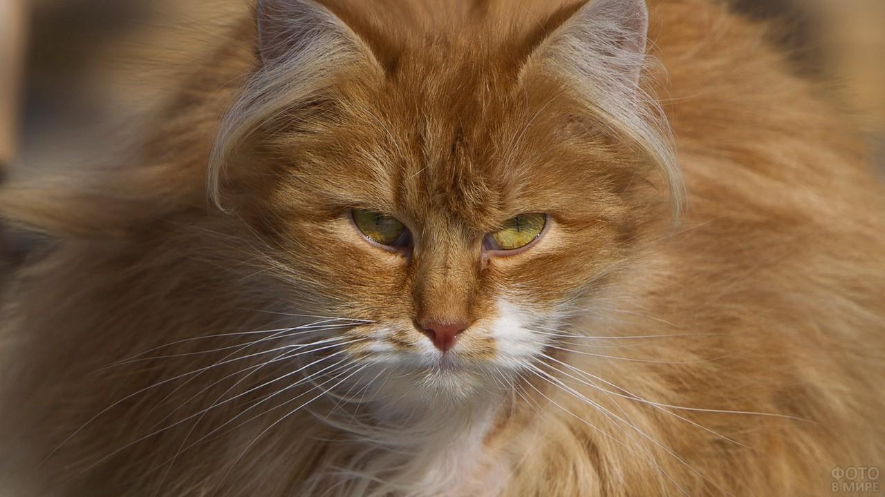 Пушистая кошка с белыми усами