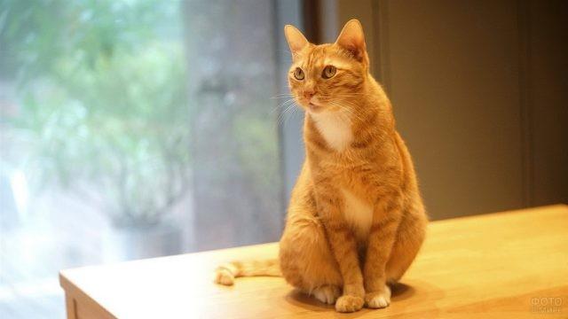 Смешная кошка на мебели в комнате