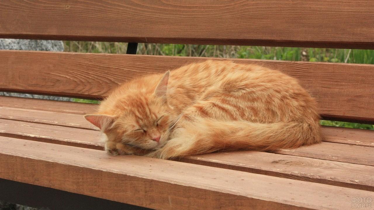 Спящая кошка на лавочке