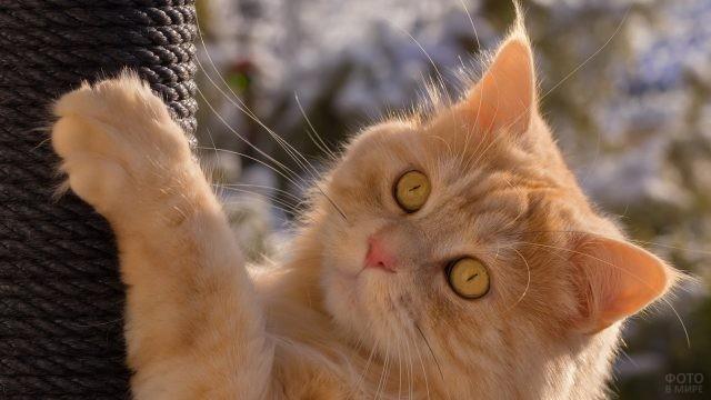 Светло-рыжая кошка лезет по дереву